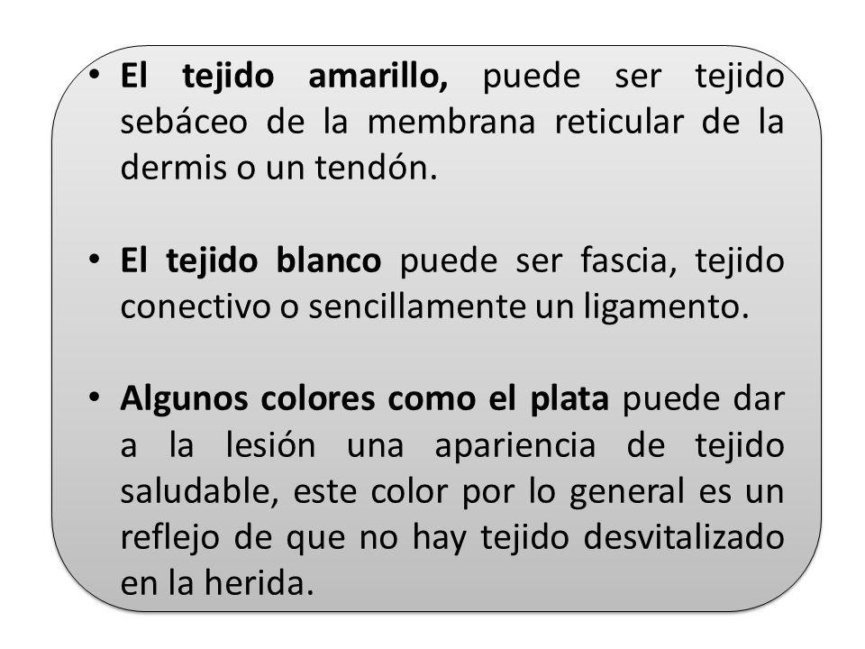 El tejido amarillo, puede ser tejido sebáceo de la membrana reticular de la dermis o un tendón.