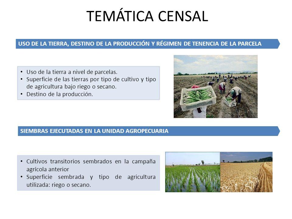 TEMÁTICA CENSAL USO DE LA TIERRA, DESTINO DE LA PRODUCCIÓN Y RÉGIMEN DE TENENCIA DE LA PARCELA. Uso de la tierra a nivel de parcelas.