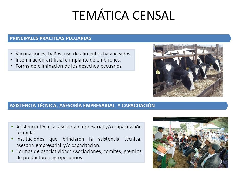 TEMÁTICA CENSAL PRINCIPALES PRÁCTICAS PECUARIAS