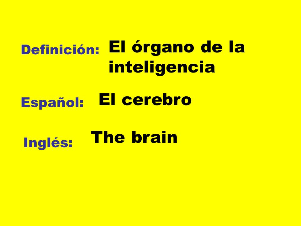 El órgano de la inteligencia