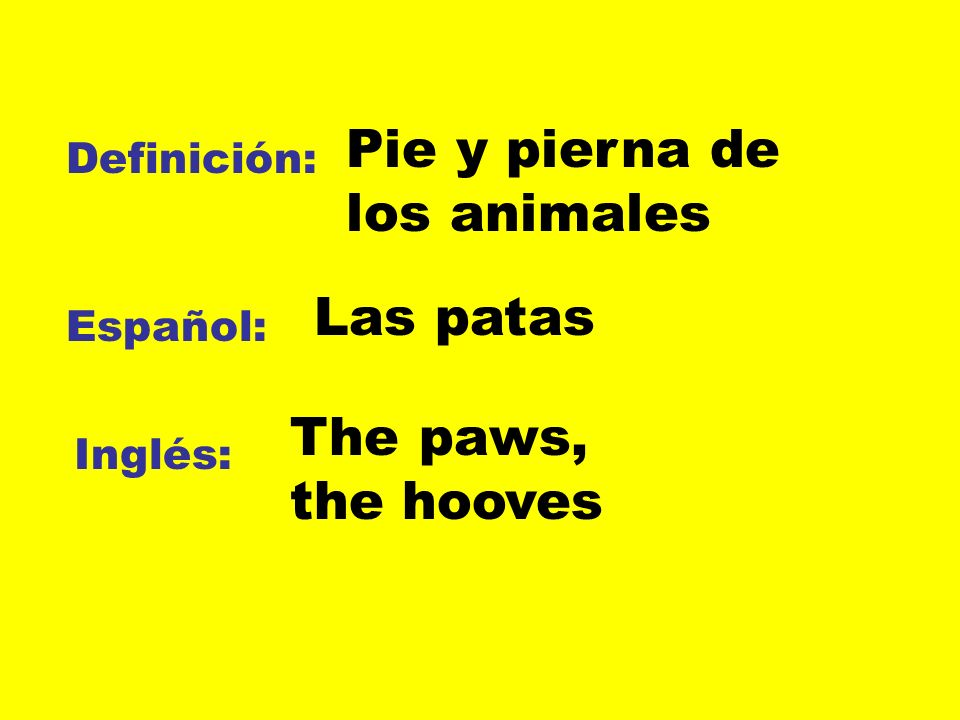 Pie y pierna de los animales