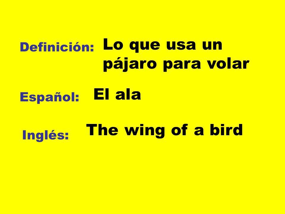 Lo que usa un pájaro para volar