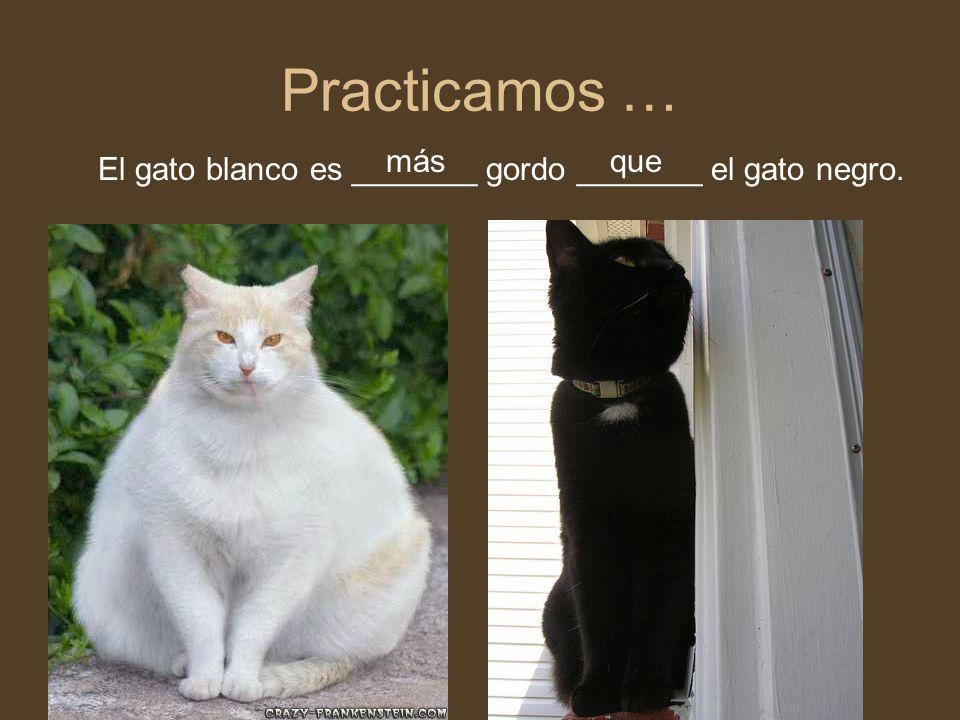 Practicamos … más que El gato blanco es _______ gordo _______ el gato negro.