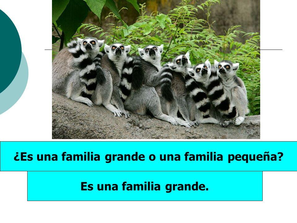 ¿Es una familia grande o una familia pequeña