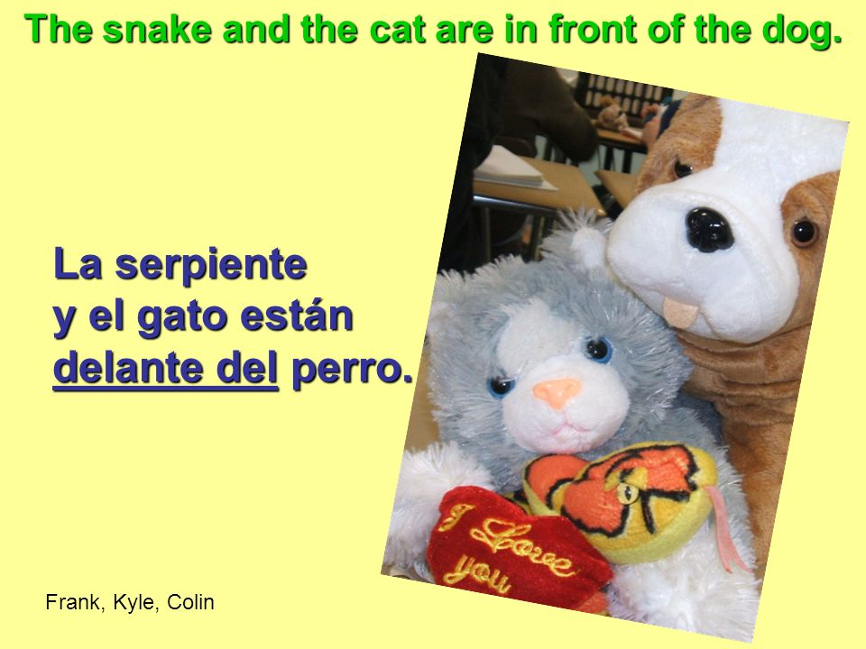 The snake and the cat are in front of the dog.