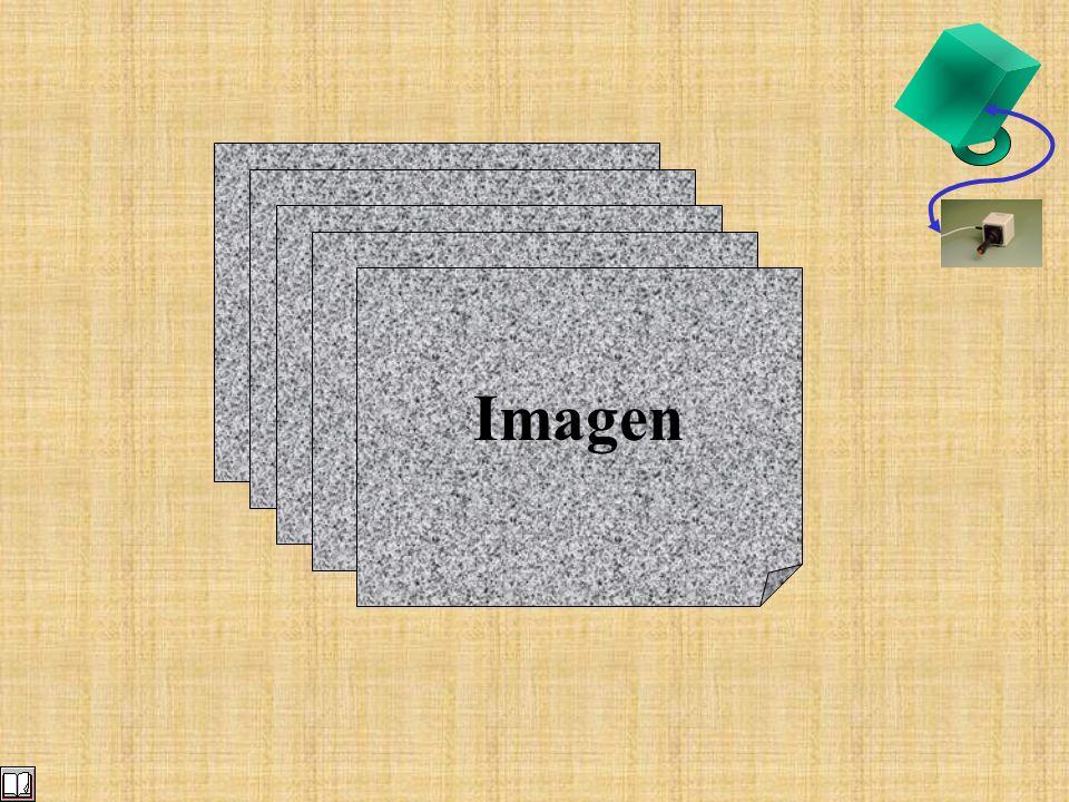 Parte del cuerpo Descripción Tipo Modelo Imagen