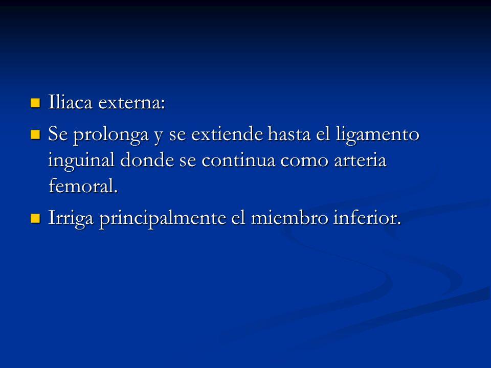 Iliaca externa: Se prolonga y se extiende hasta el ligamento inguinal donde se continua como arteria femoral.