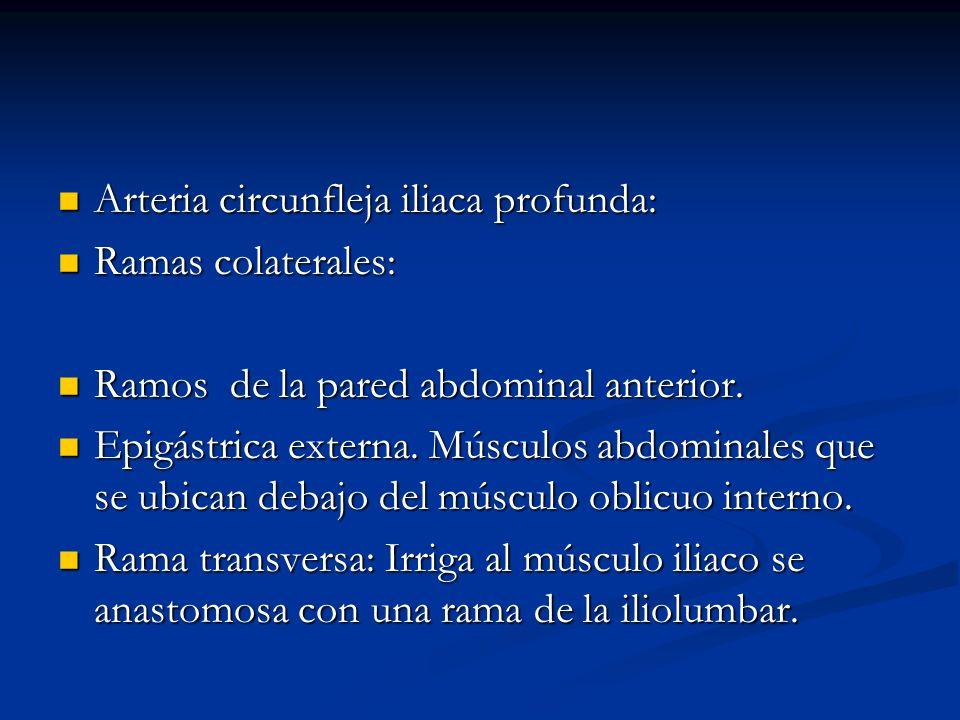 Arteria circunfleja iliaca profunda: