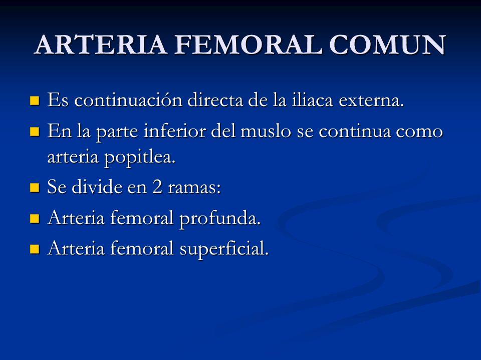 ARTERIA FEMORAL COMUN Es continuación directa de la iliaca externa.