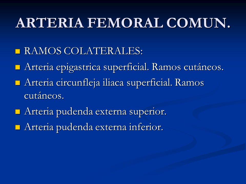 ARTERIA FEMORAL COMUN. RAMOS COLATERALES: