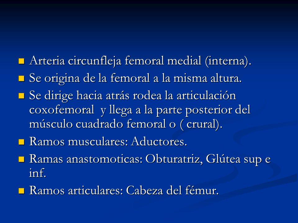 Arteria circunfleja femoral medial (interna).