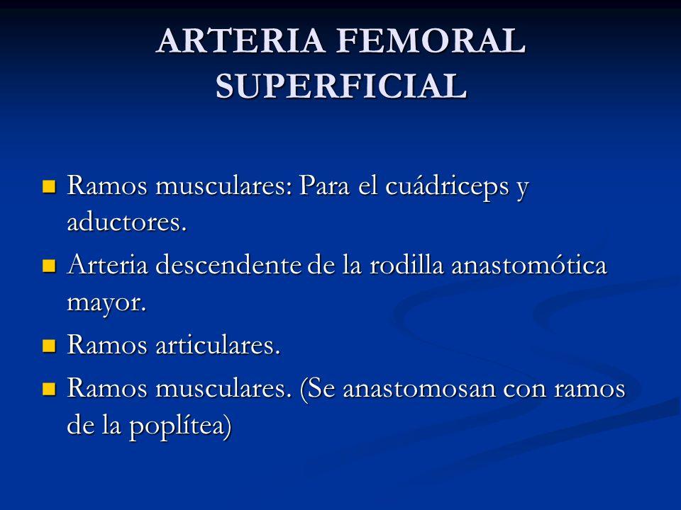 ARTERIA FEMORAL SUPERFICIAL