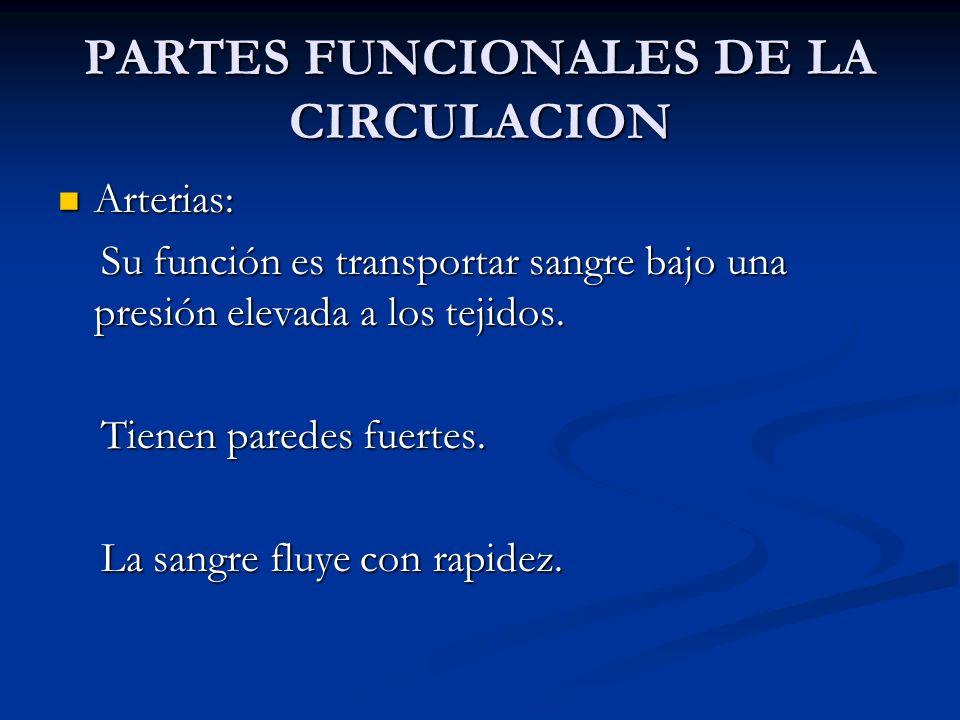PARTES FUNCIONALES DE LA CIRCULACION