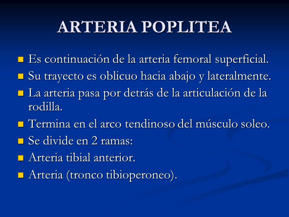 ARTERIA POPLITEA Es continuación de la arteria femoral superficial.