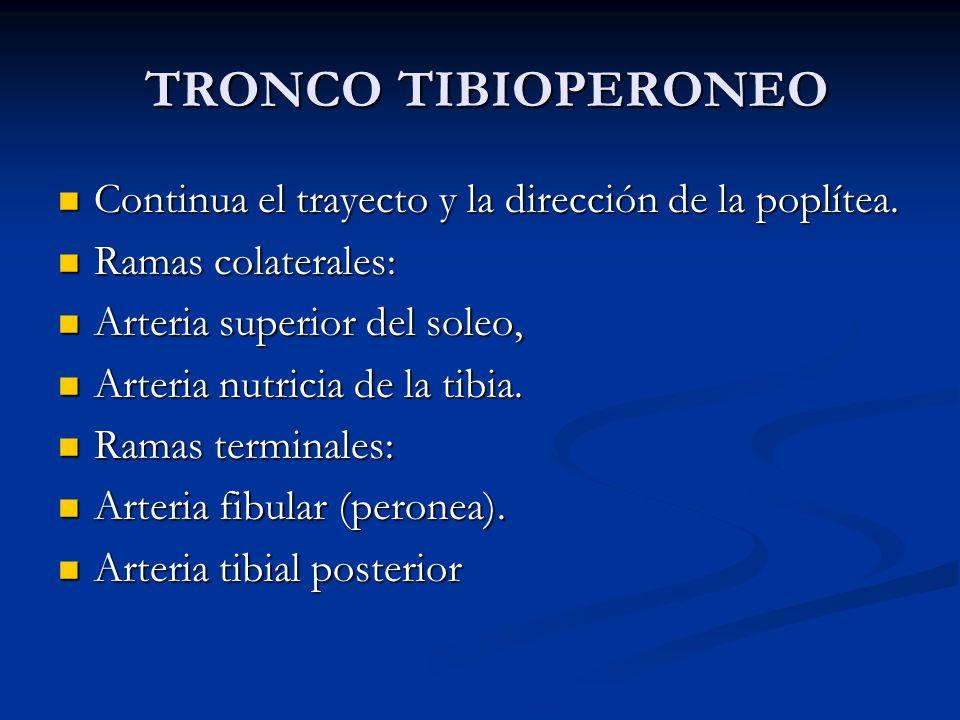 TRONCO TIBIOPERONEO Continua el trayecto y la dirección de la poplítea. Ramas colaterales: Arteria superior del soleo,
