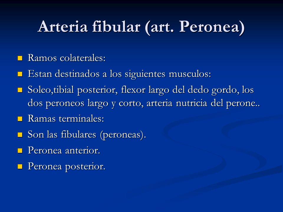 Arteria fibular (art. Peronea)