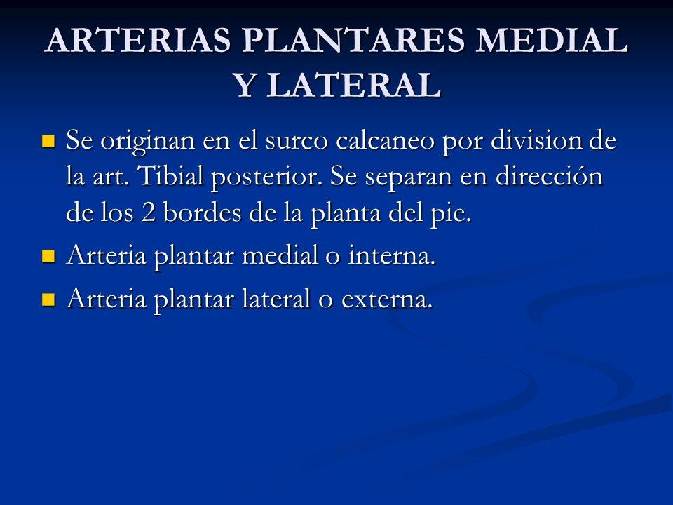 ARTERIAS PLANTARES MEDIAL Y LATERAL