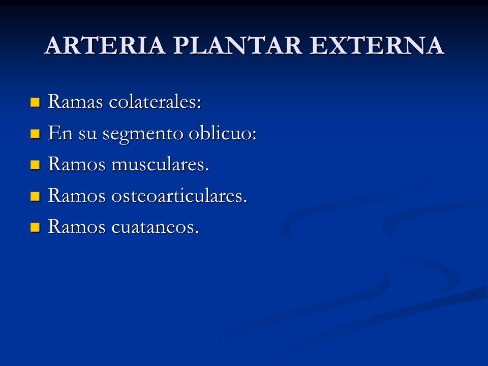 ARTERIA PLANTAR EXTERNA