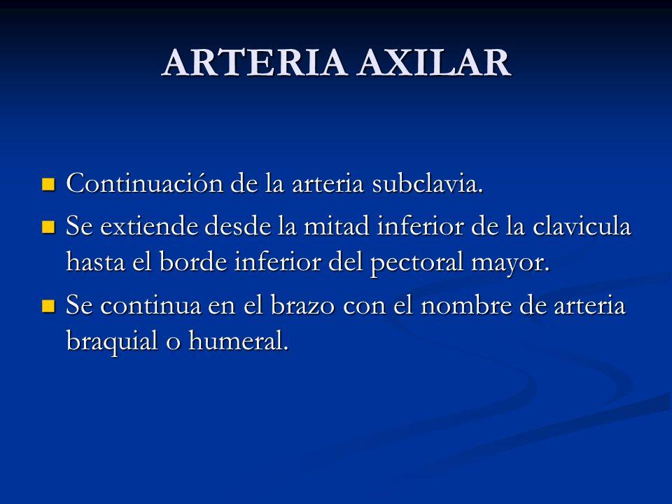 ARTERIA AXILAR Continuación de la arteria subclavia.