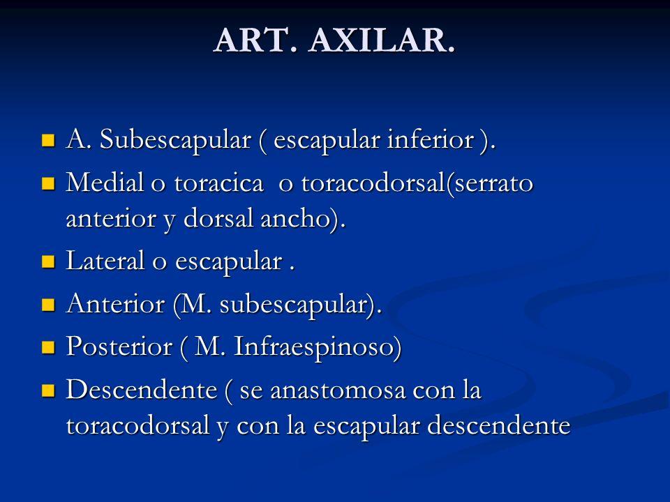 ART. AXILAR. A. Subescapular ( escapular inferior ).