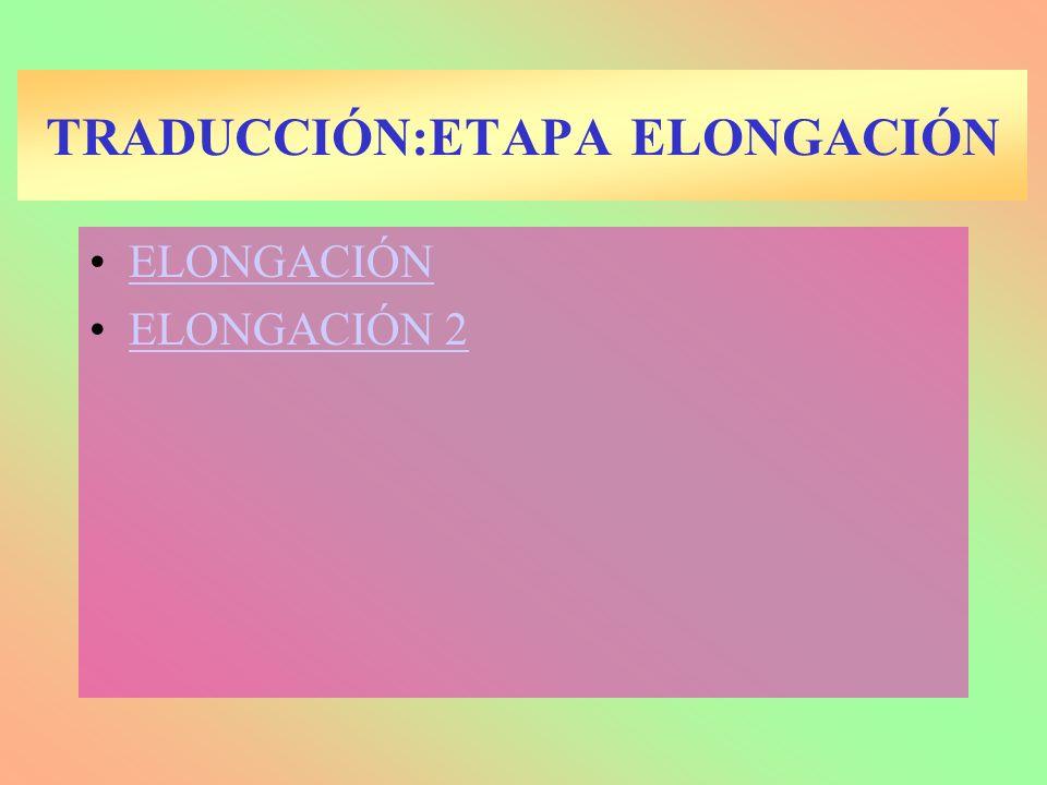 TRADUCCIÓN:ETAPA ELONGACIÓN