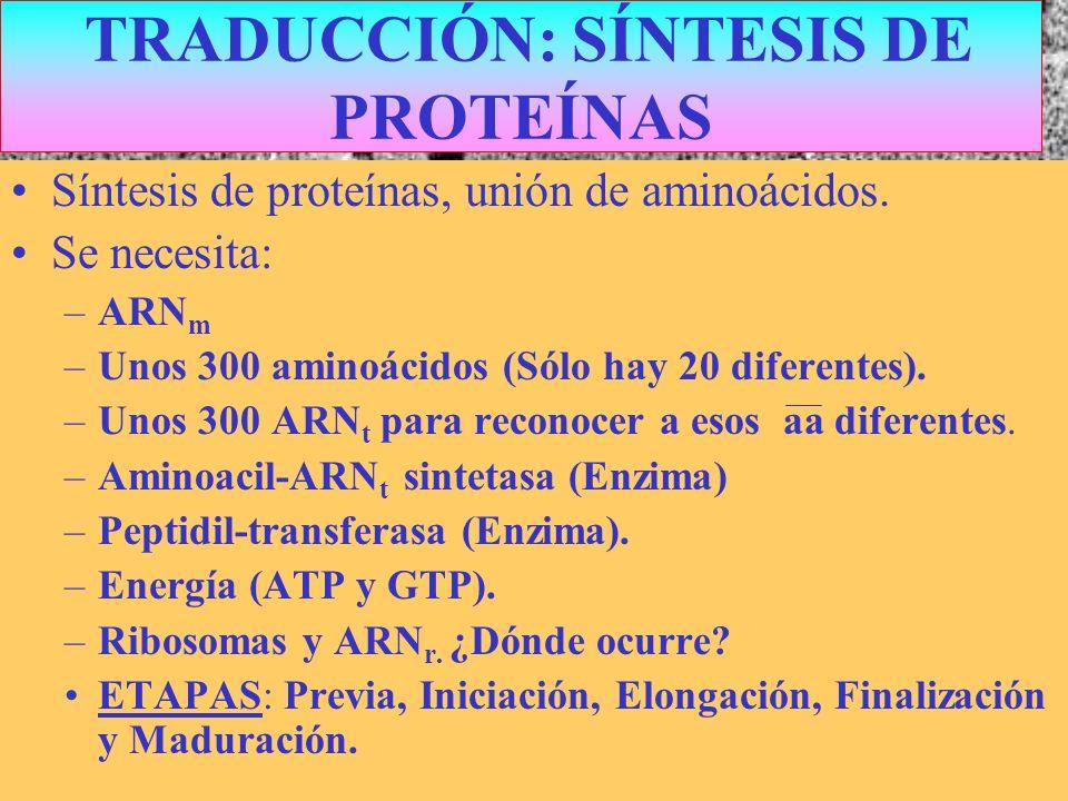 TRADUCCIÓN: SÍNTESIS DE PROTEÍNAS
