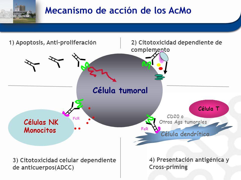 Mecanismo de acción de los AcMo