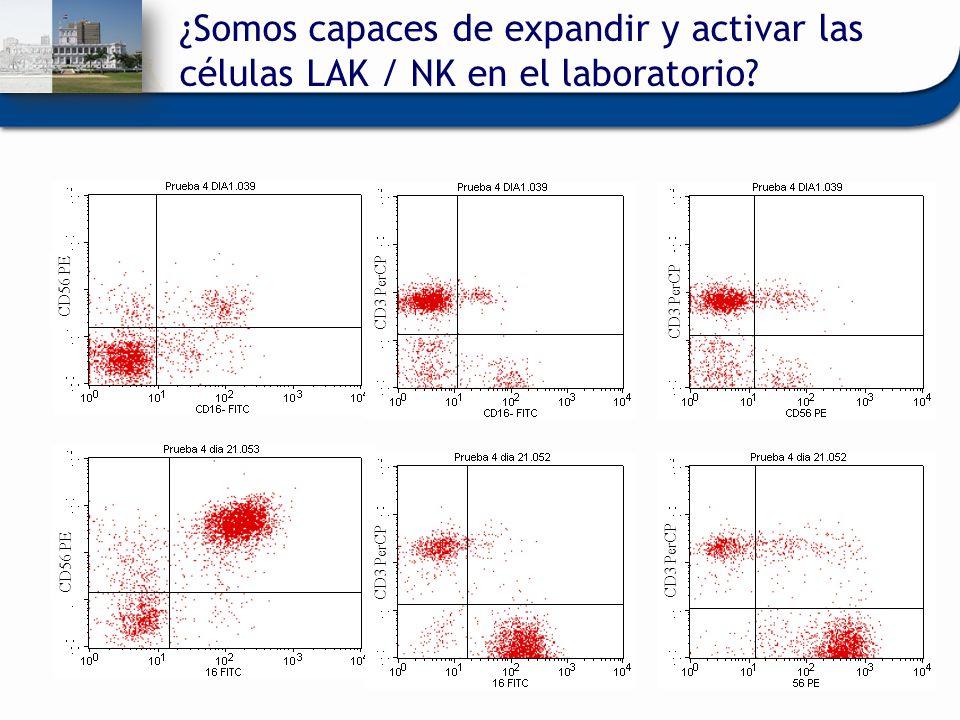 ¿Somos capaces de expandir y activar las células LAK / NK en el laboratorio