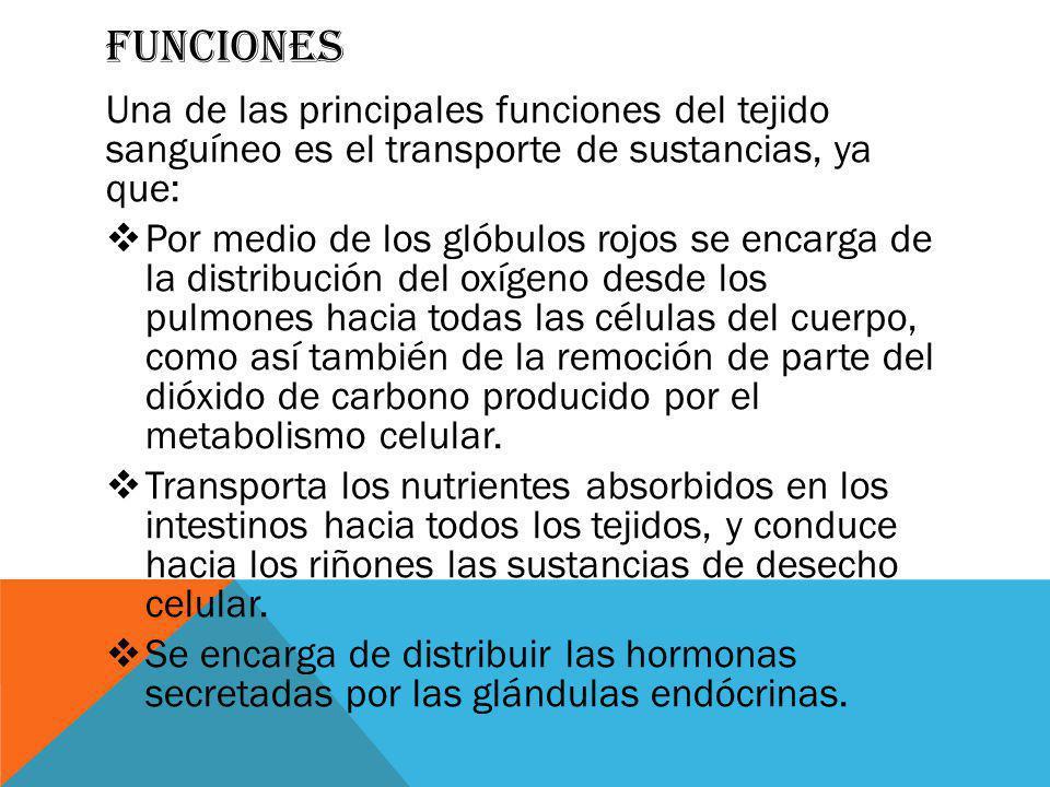Funciones Una de las principales funciones del tejido sanguíneo es el transporte de sustancias, ya que: