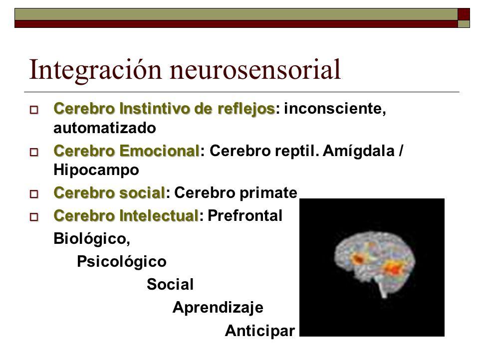 Integración neurosensorial