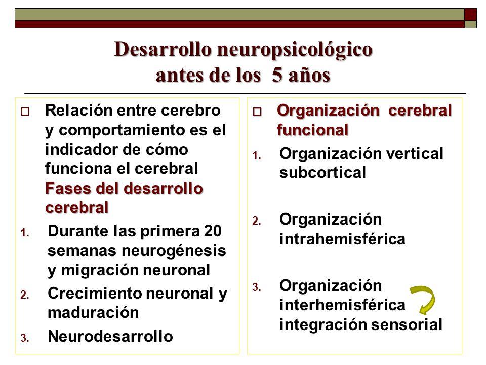 Desarrollo neuropsicológico antes de los 5 años