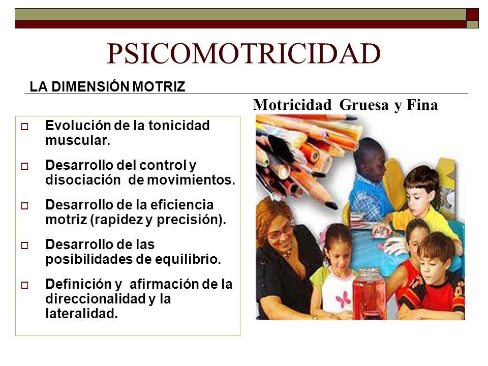 PSICOMOTRICIDAD Motricidad Gruesa y Fina LA DIMENSIÓN MOTRIZ