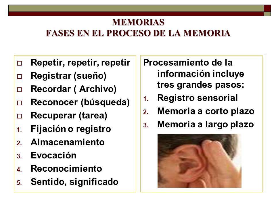 MEMORIAS FASES EN EL PROCESO DE LA MEMORIA