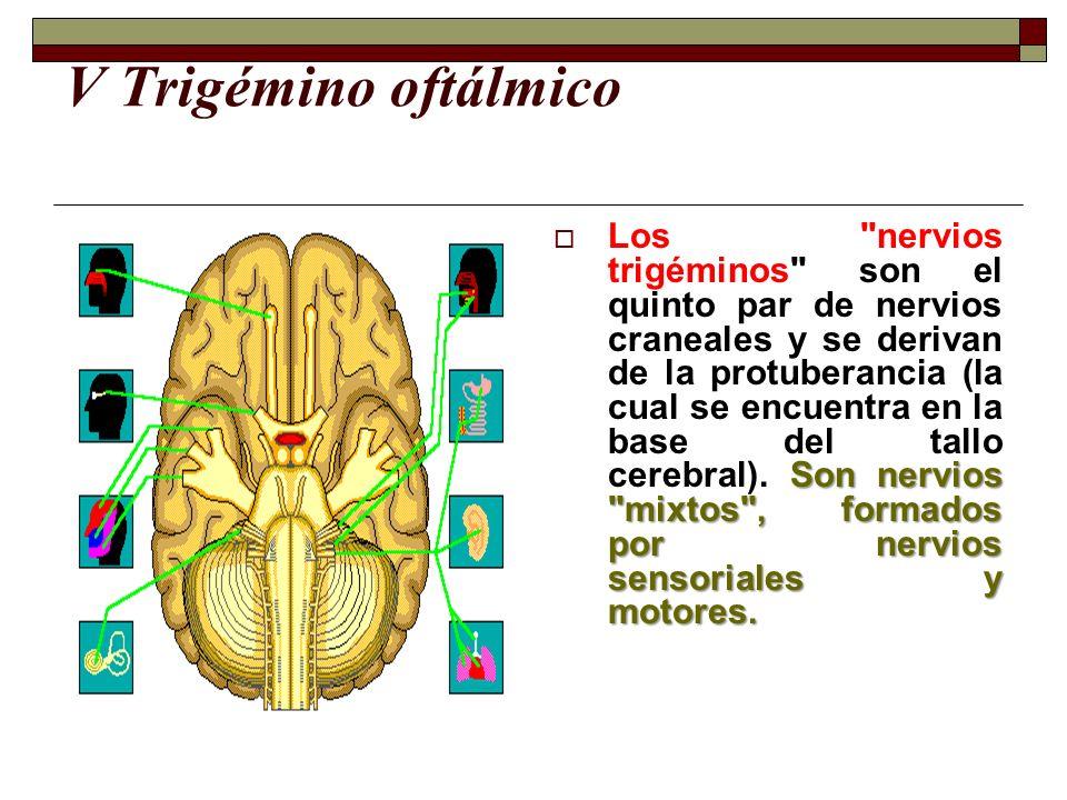 V Trigémino oftálmico