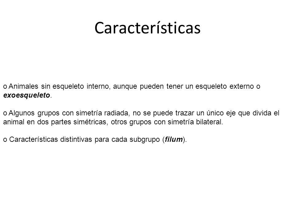 Características Animales sin esqueleto interno, aunque pueden tener un esqueleto externo o exoesqueleto.