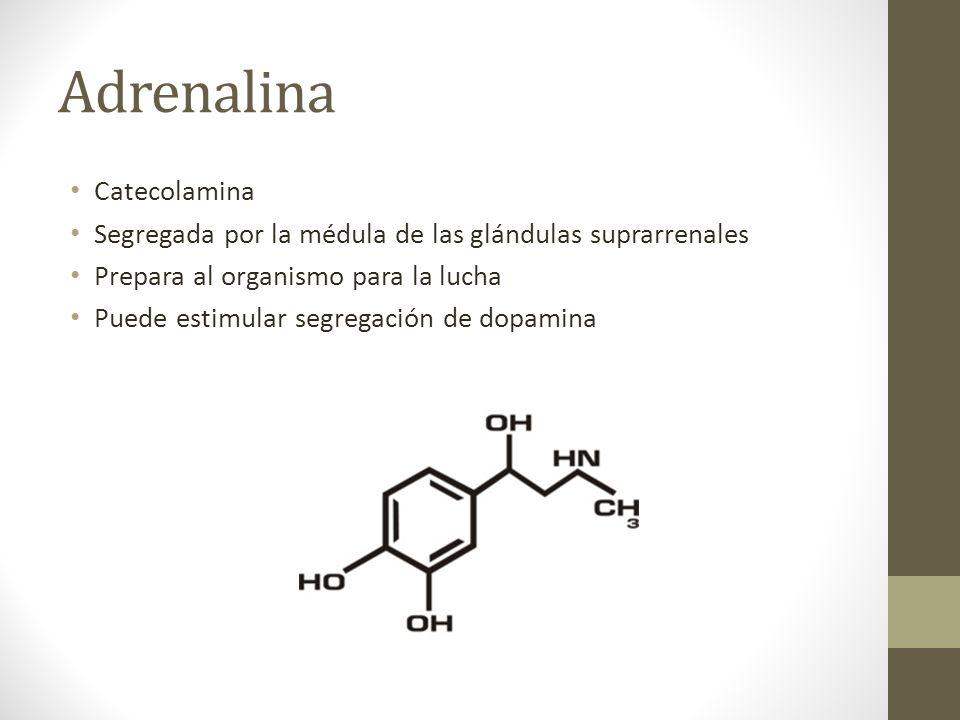 Adrenalina Catecolamina
