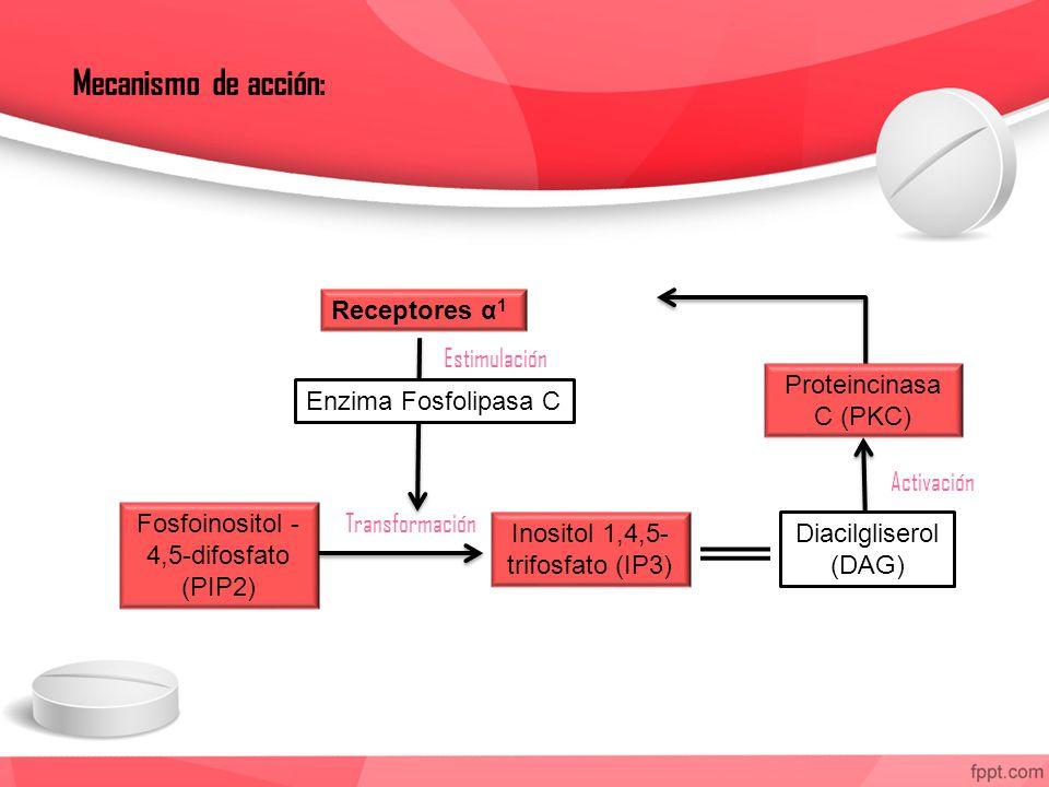 Mecanismo de acción: Receptores α1 Estimulación Proteincinasa C (PKC)
