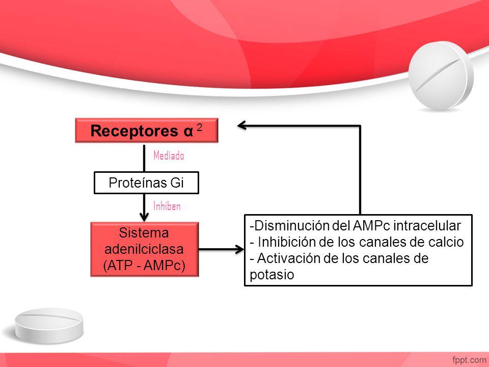 Sistema adenilciclasa (ATP - AMPc)