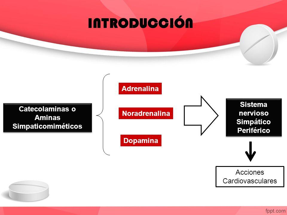 Sistema nervioso Simpático Periférico Aminas Simpaticomiméticos