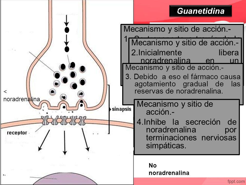 Neurotransmisor falso Mecanismo y sitio de acción.-