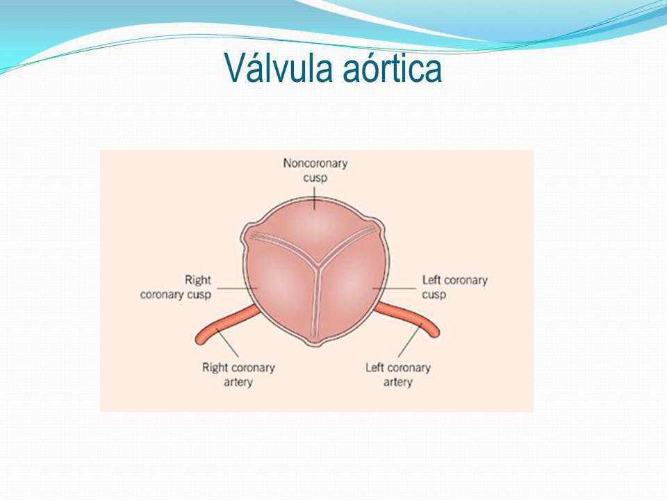 Válvula aórtica
