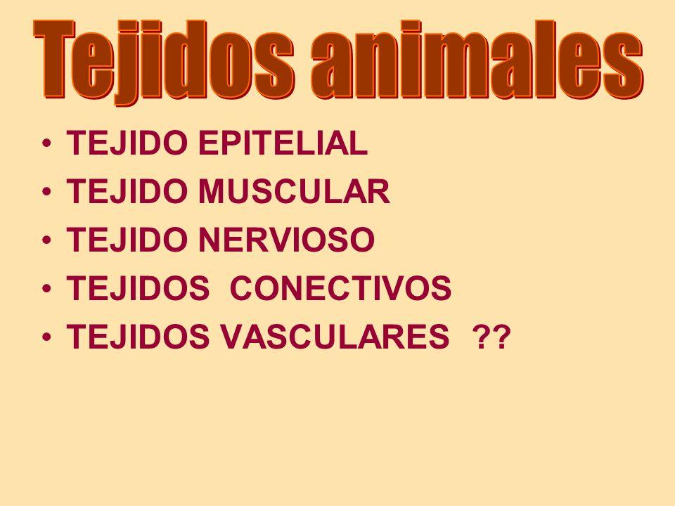 Tejidos animales TEJIDO EPITELIAL. TEJIDO MUSCULAR.