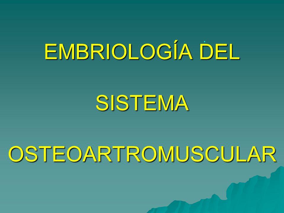 EMBRIOLOGÍA DEL SISTEMA OSTEOARTROMUSCULAR