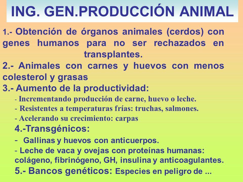 ING. GEN.PRODUCCIÓN ANIMAL