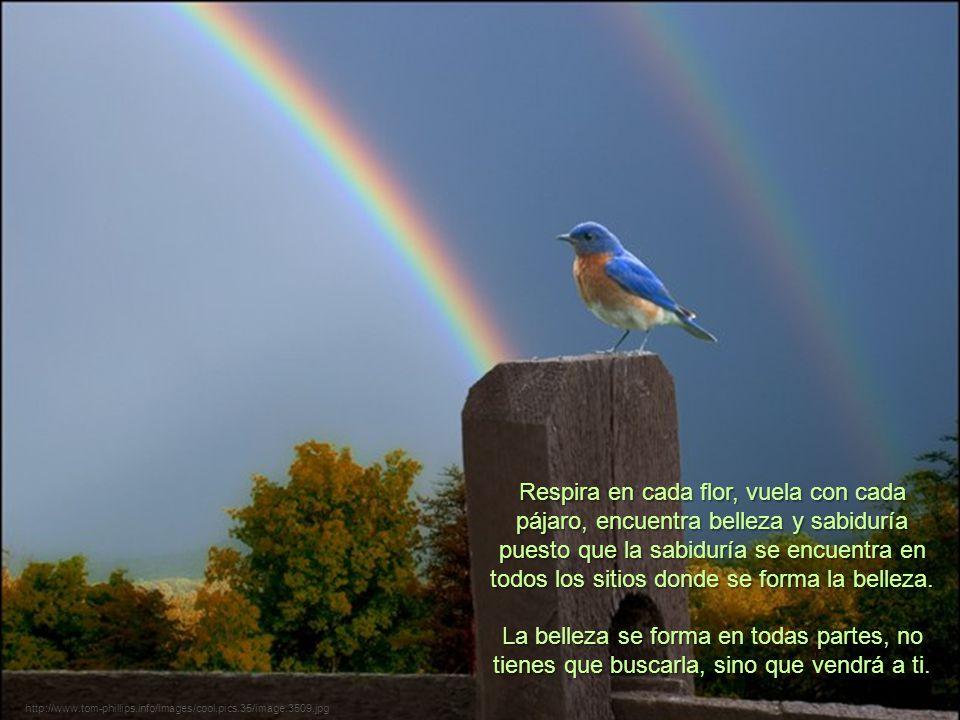 Respira en cada flor, vuela con cada pájaro, encuentra belleza y sabiduría puesto que la sabiduría se encuentra en todos los sitios donde se forma la belleza.