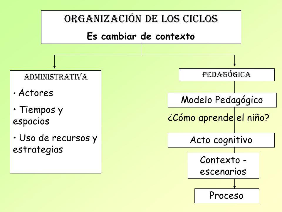 ORGANIZACIÓN de los ciclos