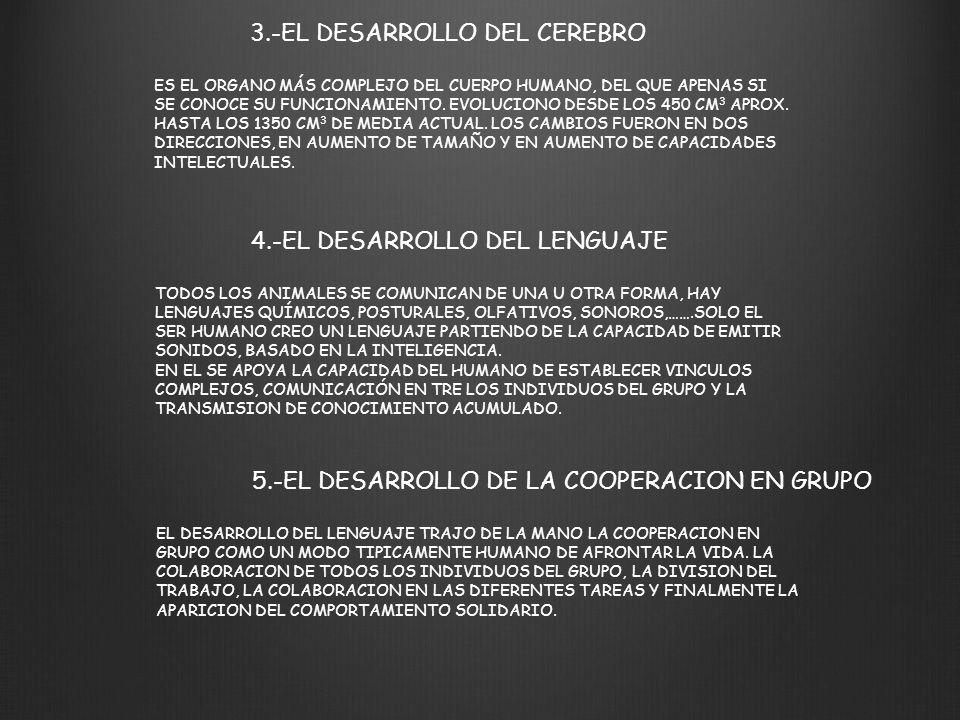 3.-EL DESARROLLO DEL CEREBRO