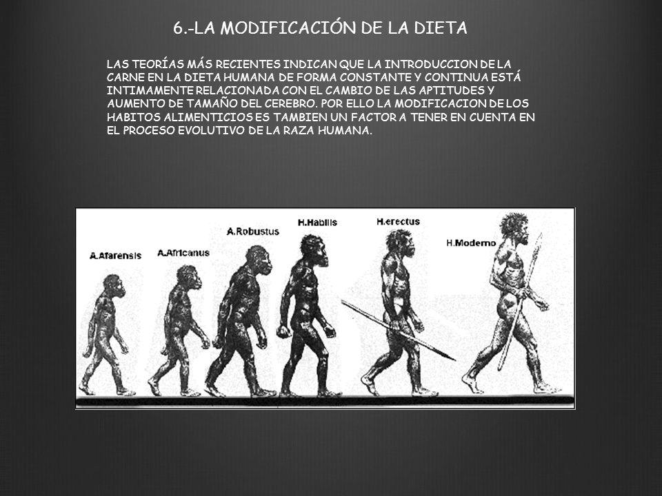 6.-LA MODIFICACIÓN DE LA DIETA