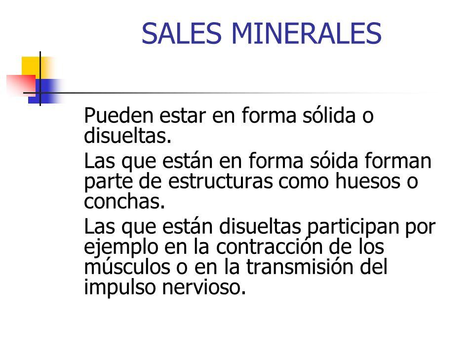 SALES MINERALES Pueden estar en forma sólida o disueltas. Las que están en forma sóida forman parte de estructuras como huesos o conchas.