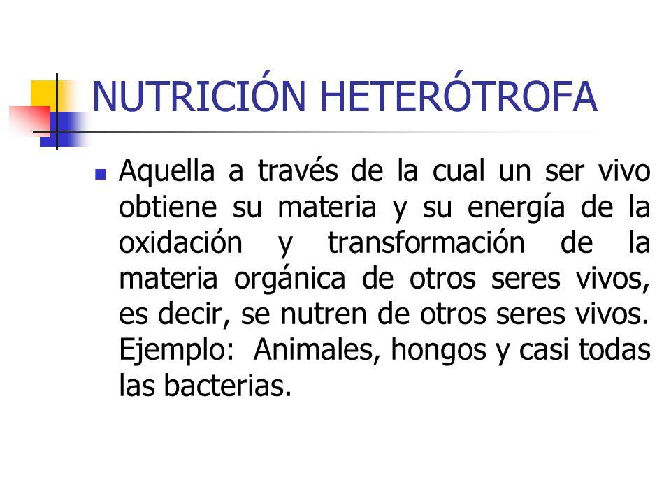 NUTRICIÓN HETERÓTROFA